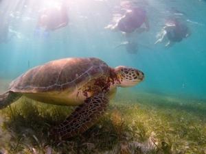 Akumal ,( ak tortuga Umal reunión ) también el pueblo tiene el derecho de ver a las tortugas .